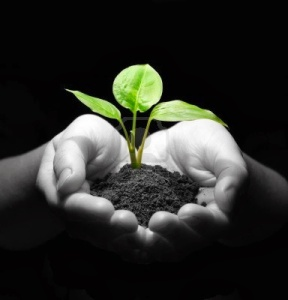 3979612-hands-holding-sapling-in-soil